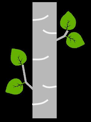 Gray Birch Solutions